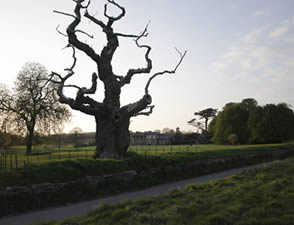The Life of a Dead Tree Contemporary art project in Corsham, Wiltshire, by Penney Ellis.