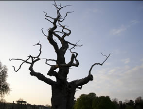 The Life of a Dead Tree. Contemporary art project in Corsham, Wiltshire, by Penney Ellis.
